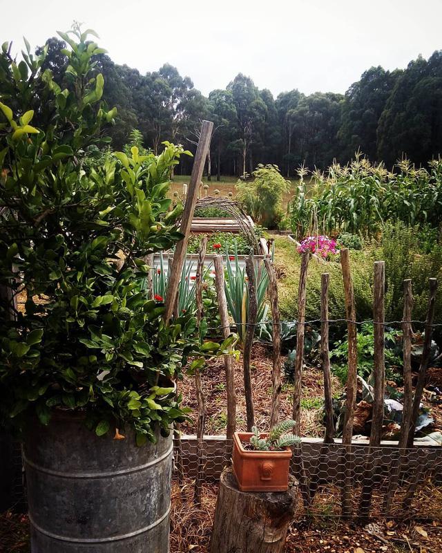 Gia đình 5 người quyết tâm không trở lại thành phố vì quá yêu thích cuộc sống nhà vườn ở nông thôn - Ảnh 23.