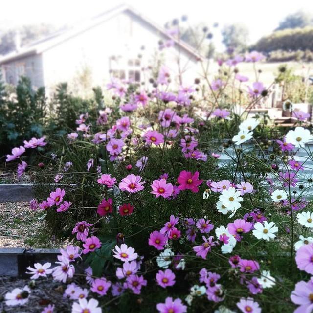 Gia đình 5 người quyết tâm không trở lại thành phố vì quá yêu thích cuộc sống nhà vườn ở nông thôn - Ảnh 25.