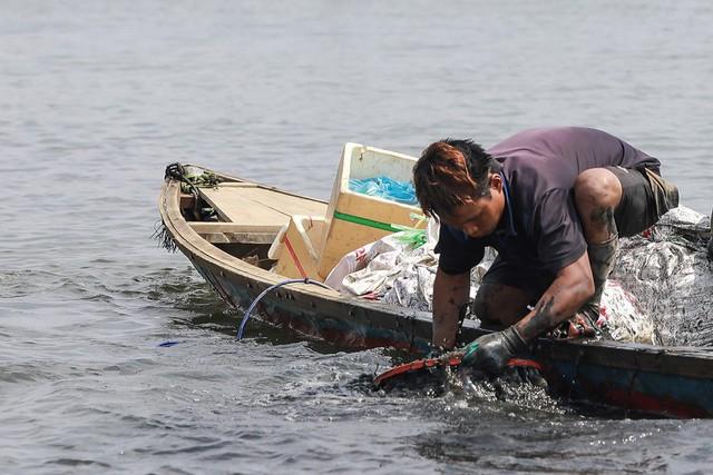 Bắt vẹm đen kiếm tiền triệu mỗi ngày ở ngã ba sông - Ảnh 4.