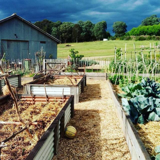Gia đình 5 người quyết tâm không trở lại thành phố vì quá yêu thích cuộc sống nhà vườn ở nông thôn - Ảnh 6.