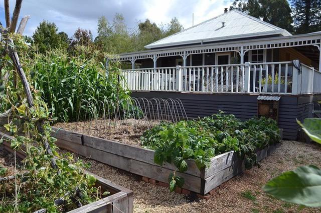 Gia đình 5 người quyết tâm không trở lại thành phố vì quá yêu thích cuộc sống nhà vườn ở nông thôn - Ảnh 7.