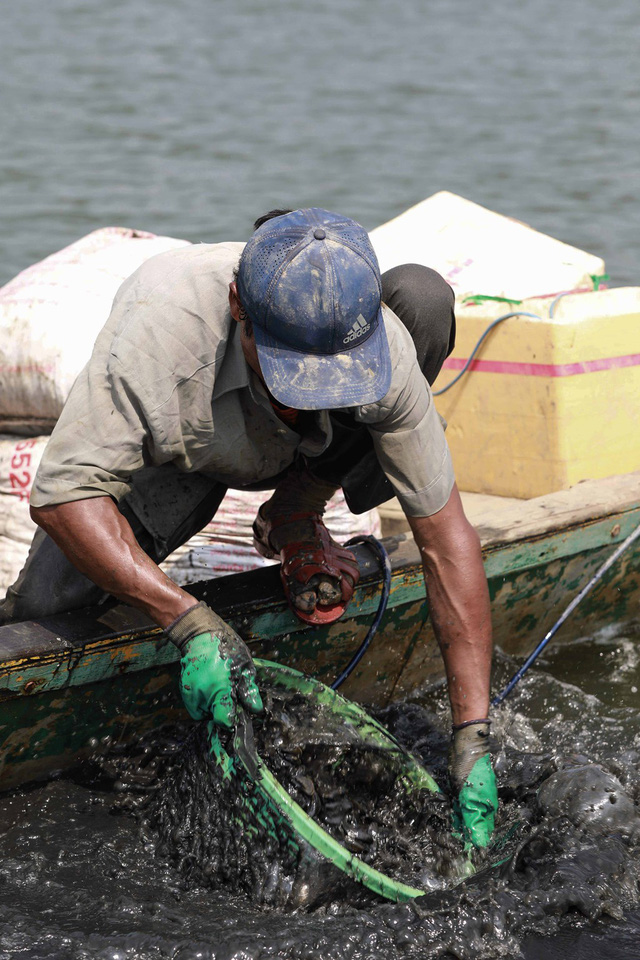 Bắt vẹm đen kiếm tiền triệu mỗi ngày ở ngã ba sông - Ảnh 9.