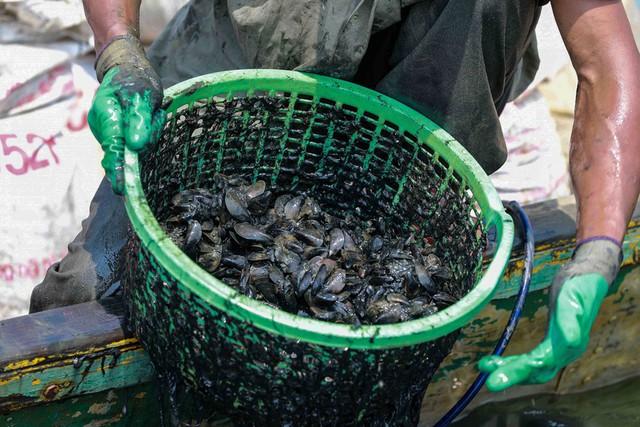 Bắt vẹm đen kiếm tiền triệu mỗi ngày ở ngã ba sông - Ảnh 10.