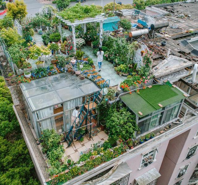 Tận dụng mái nhà bỏ hoang, người phụ nữ 45 tuổi đã biến toàn bộ không gian thành khu vườn địa đàng - Ảnh 1.