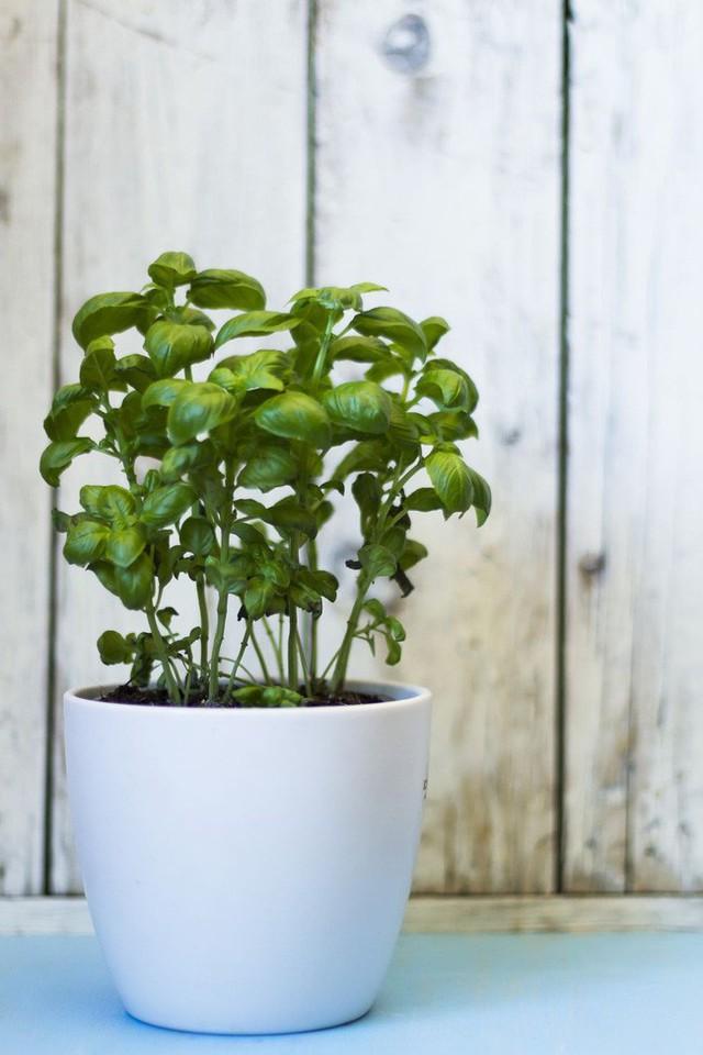 10 loại cây trồng hoàn hảo dành cho những ai lần đầu muốn làm vườn trong nhà - Ảnh 1.