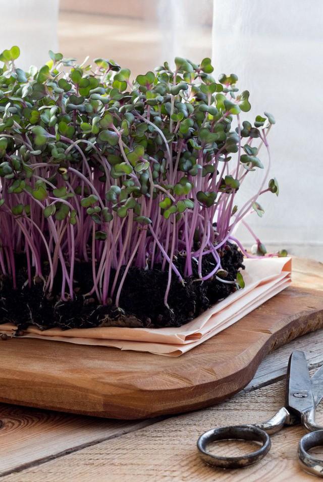 10 loại cây trồng hoàn hảo dành cho những ai lần đầu muốn làm vườn trong nhà - Ảnh 3.