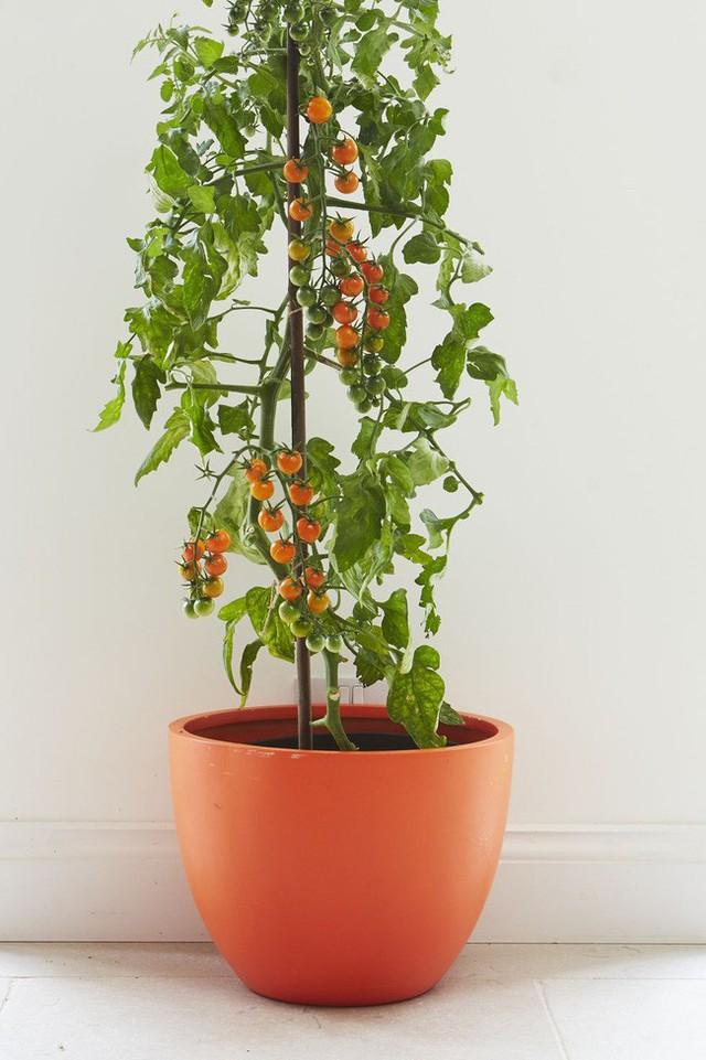 10 loại cây trồng hoàn hảo dành cho những ai lần đầu muốn làm vườn trong nhà - Ảnh 4.