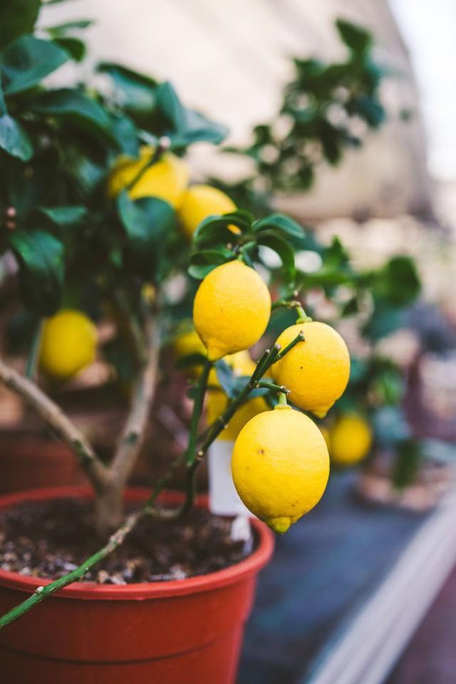 10 loại cây trồng hoàn hảo dành cho những ai lần đầu muốn làm vườn trong nhà - Ảnh 6.