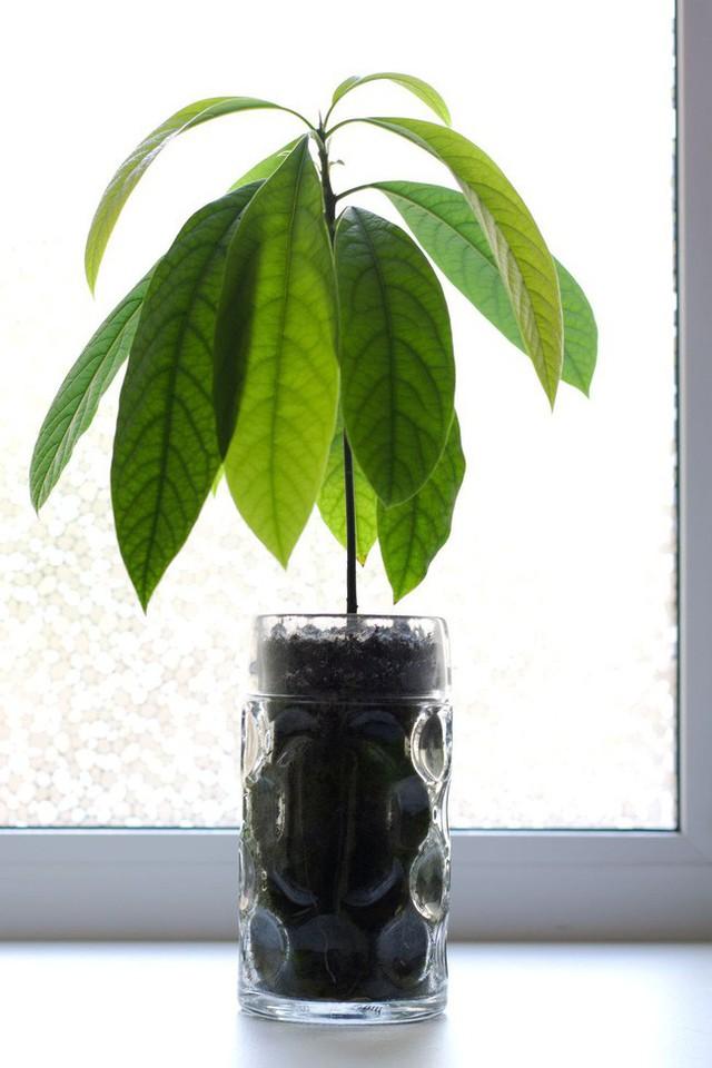 10 loại cây trồng hoàn hảo dành cho những ai lần đầu muốn làm vườn trong nhà - Ảnh 7.