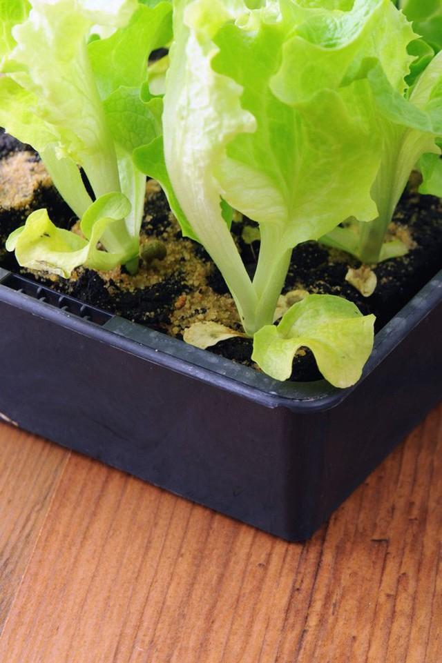 10 loại cây trồng hoàn hảo dành cho những ai lần đầu muốn làm vườn trong nhà - Ảnh 8.