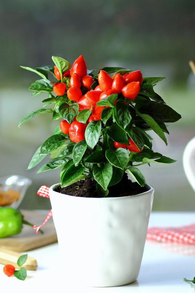 10 loại cây trồng hoàn hảo dành cho những ai lần đầu muốn làm vườn trong nhà - Ảnh 10.
