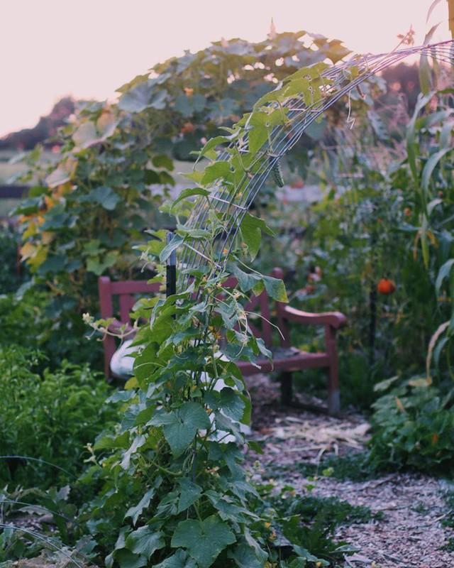 Khu vườn đẹp như tranh vẽ khiến nhiều người ngẩn ngơ khi bước qua của cô gái 20 tuổi có niềm đam mê trồng trọt - Ảnh 11.