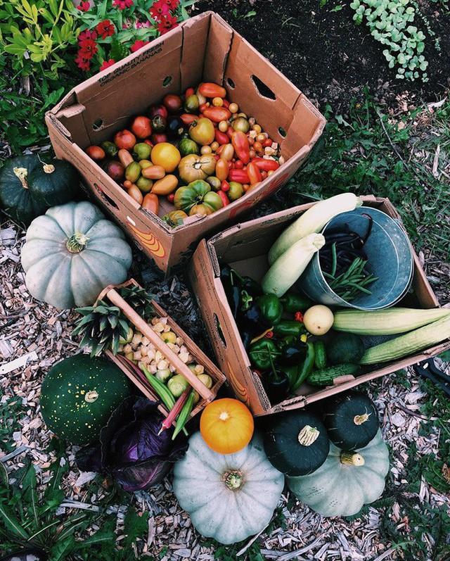 Khu vườn đẹp như tranh vẽ khiến nhiều người ngẩn ngơ khi bước qua của cô gái 20 tuổi có niềm đam mê trồng trọt - Ảnh 12.