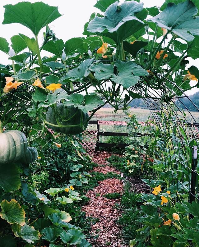 Khu vườn đẹp như tranh vẽ khiến nhiều người ngẩn ngơ khi bước qua của cô gái 20 tuổi có niềm đam mê trồng trọt - Ảnh 18.