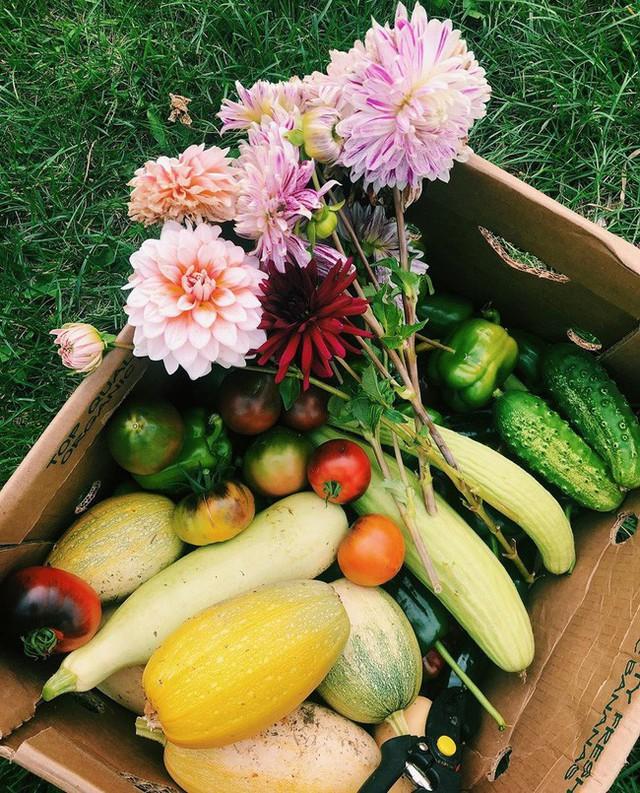 Khu vườn đẹp như tranh vẽ khiến nhiều người ngẩn ngơ khi bước qua của cô gái 20 tuổi có niềm đam mê trồng trọt - Ảnh 3.