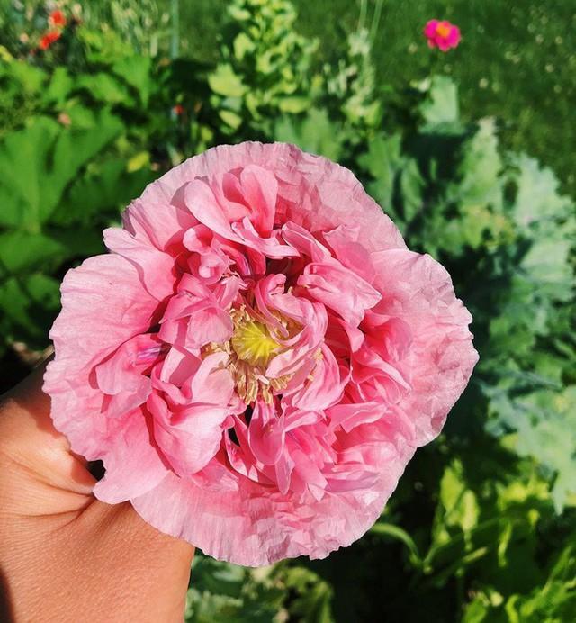 Khu vườn đẹp như tranh vẽ khiến nhiều người ngẩn ngơ khi bước qua của cô gái 20 tuổi có niềm đam mê trồng trọt - Ảnh 5.