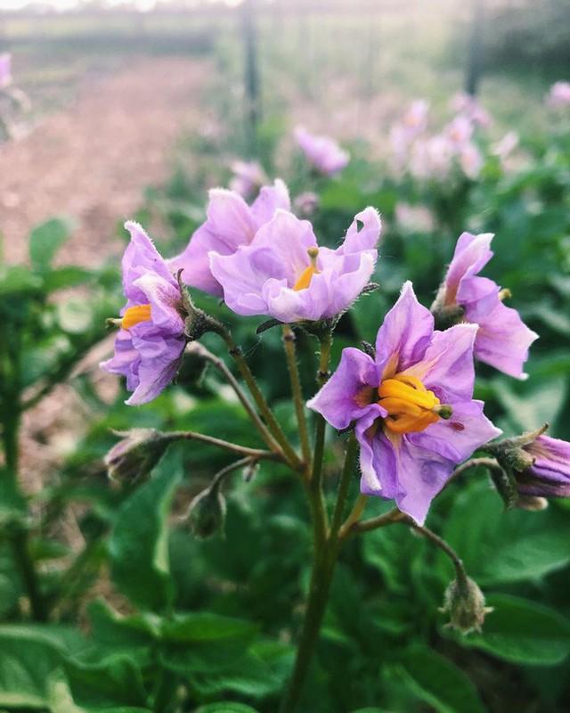 Khu vườn đẹp như tranh vẽ khiến nhiều người ngẩn ngơ khi bước qua của cô gái 20 tuổi có niềm đam mê trồng trọt - Ảnh 8.
