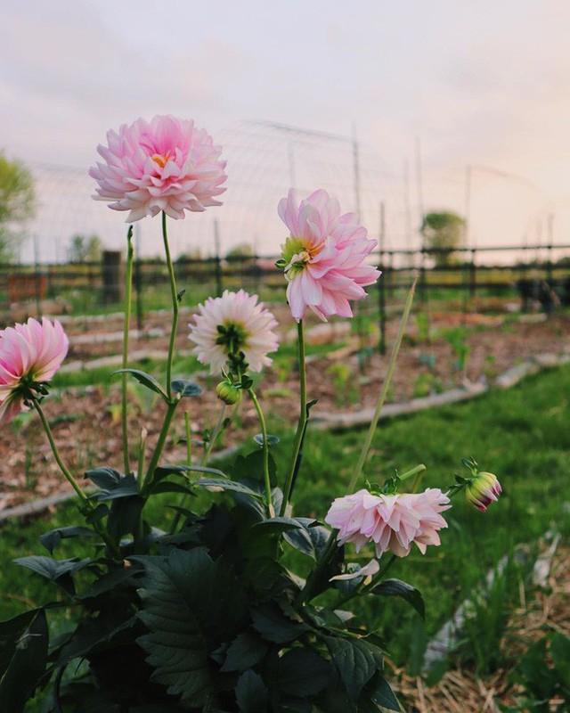 Khu vườn đẹp như tranh vẽ khiến nhiều người ngẩn ngơ khi bước qua của cô gái 20 tuổi có niềm đam mê trồng trọt - Ảnh 9.