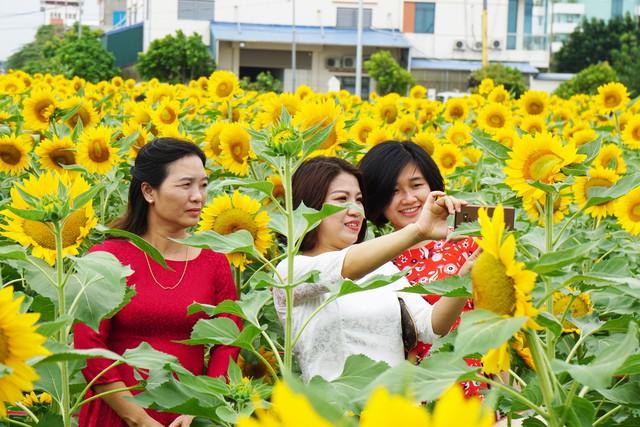 """Người dân """"phát sốt"""" với cánh đồng hoa hướng dương ở Hải Dương  - Ảnh 3."""