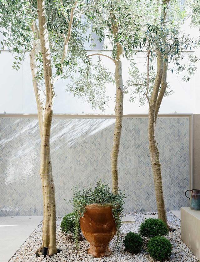 Dù chỉ sở hữu một không gian nhỏ xíu vẫn có vô vàn cách sáng tạo để trồng cây xanh - Ảnh 6.