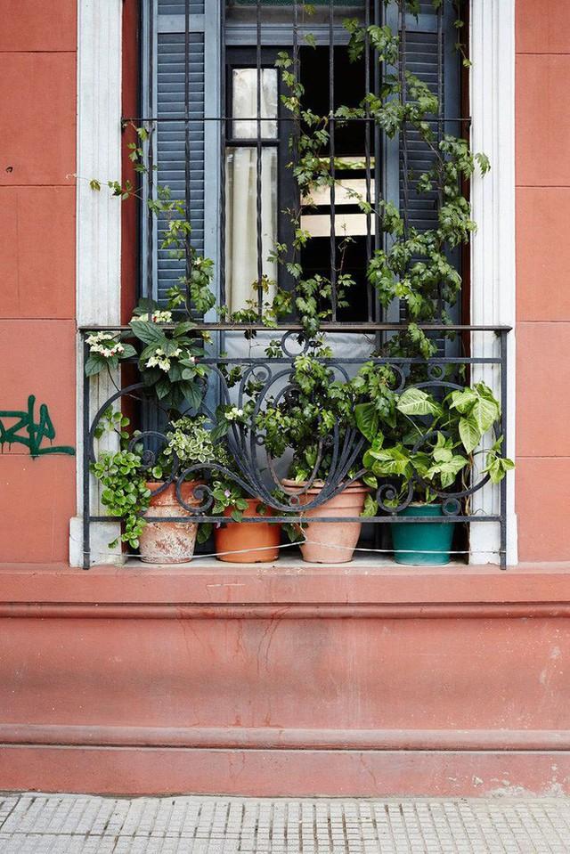 Dù chỉ sở hữu một không gian nhỏ xíu vẫn có vô vàn cách sáng tạo để trồng cây xanh - Ảnh 9.