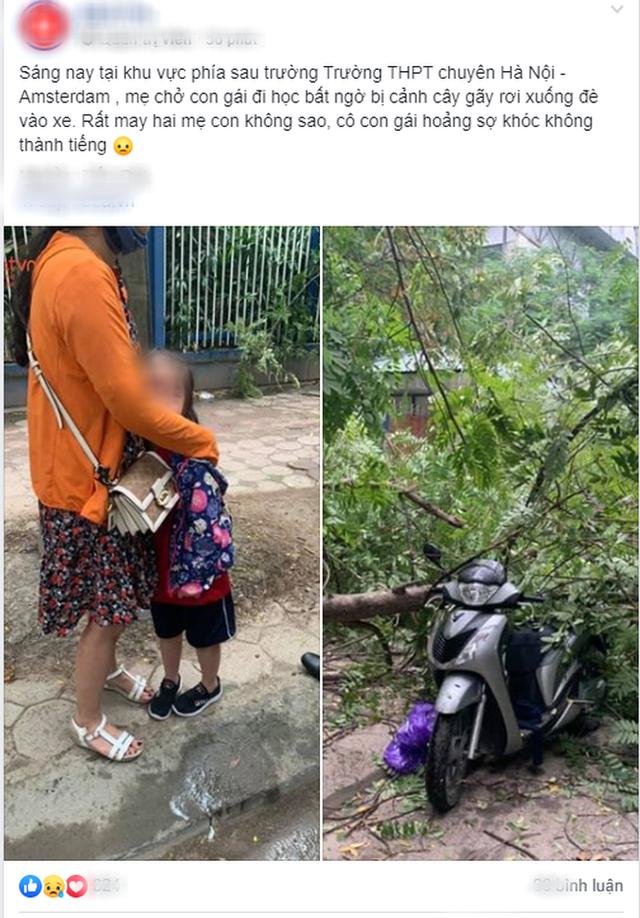 Hà Nội: Mẹ chở con gái đi học bất ngờ bị cành cây rớt xuống đè trúng xe, may mắn thoát chết - Ảnh 1.