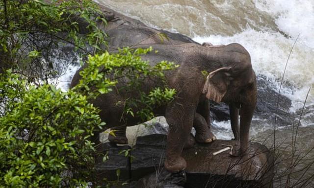 6 con voi chết vì cứu nhau khi ngã xuống thác nước tử thần ở Thái  - Ảnh 1.