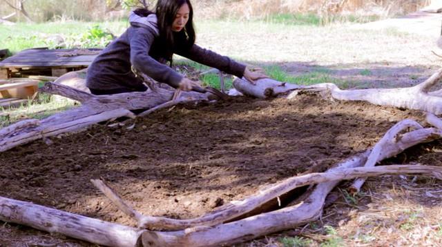 Rau khổng lồ trong khu vườn Việt ở Australia  - Ảnh 4.