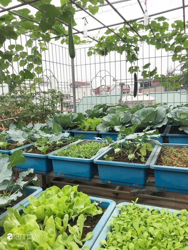 Kinh nghiệm trồng rau quả tốt tươi, bội thu trên sân thượng của mẹ đảm ở Hà Nội - Ảnh 2.