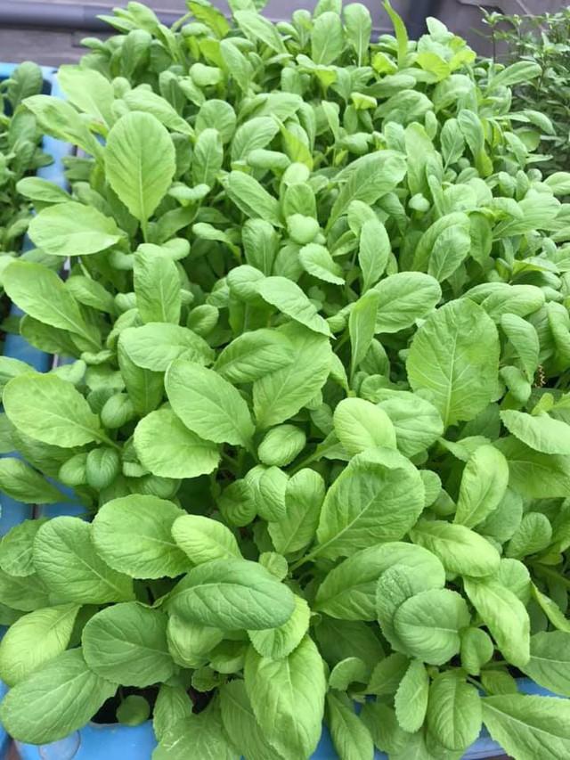 Kinh nghiệm trồng rau quả tốt tươi, bội thu trên sân thượng của mẹ đảm ở Hà Nội - Ảnh 11.