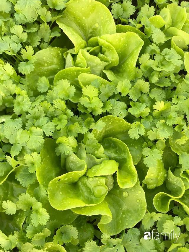 Kinh nghiệm trồng rau quả tốt tươi, bội thu trên sân thượng của mẹ đảm ở Hà Nội - Ảnh 12.