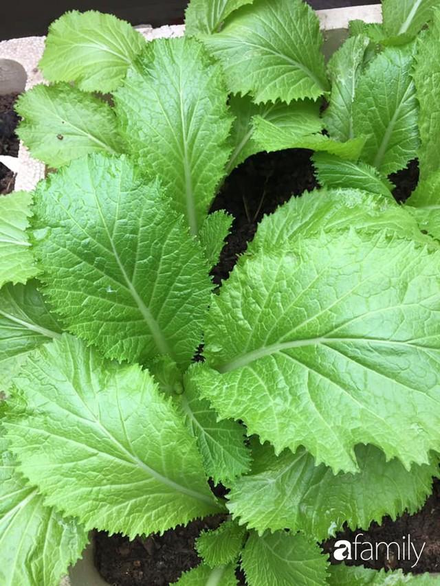 Kinh nghiệm trồng rau quả tốt tươi, bội thu trên sân thượng của mẹ đảm ở Hà Nội - Ảnh 16.