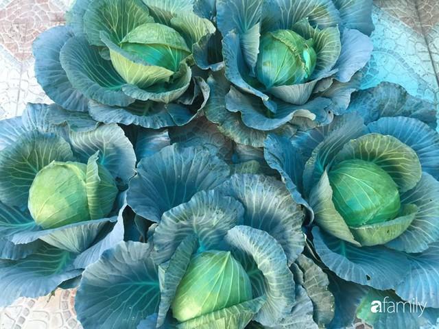 Kinh nghiệm trồng rau quả tốt tươi, bội thu trên sân thượng của mẹ đảm ở Hà Nội - Ảnh 17.