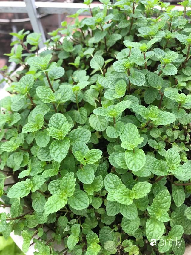 Kinh nghiệm trồng rau quả tốt tươi, bội thu trên sân thượng của mẹ đảm ở Hà Nội - Ảnh 18.