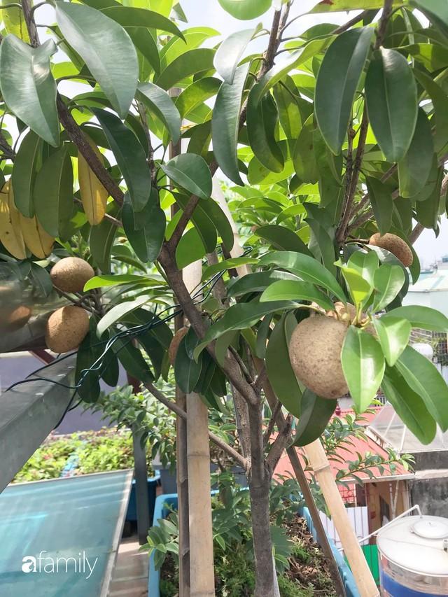 Kinh nghiệm trồng rau quả tốt tươi, bội thu trên sân thượng của mẹ đảm ở Hà Nội - Ảnh 20.