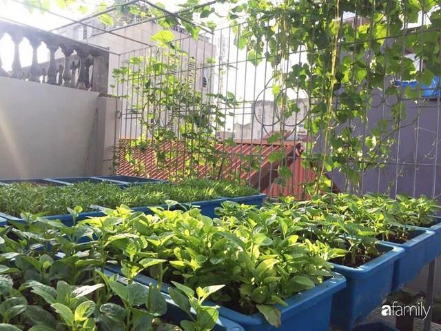 Kinh nghiệm trồng rau quả tốt tươi, bội thu trên sân thượng của mẹ đảm ở Hà Nội - Ảnh 3.