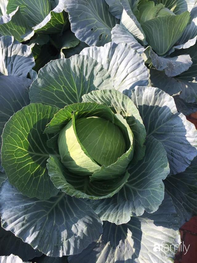 Kinh nghiệm trồng rau quả tốt tươi, bội thu trên sân thượng của mẹ đảm ở Hà Nội - Ảnh 26.