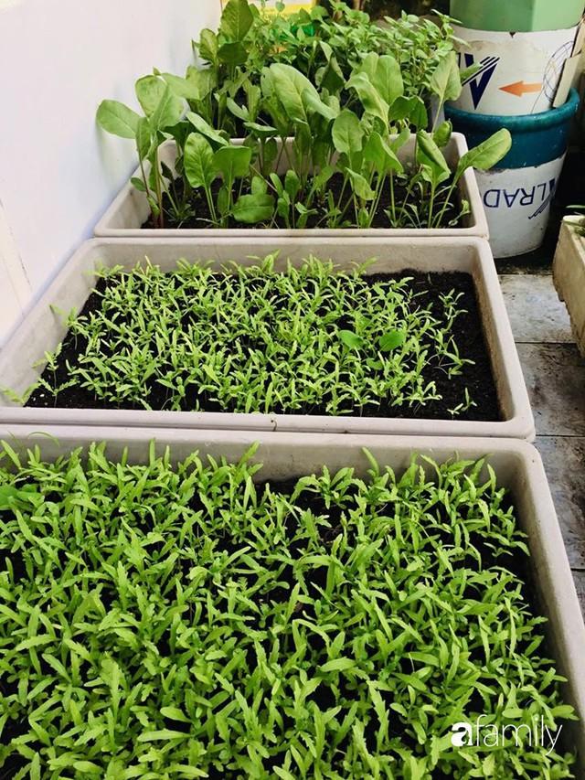 Kinh nghiệm trồng rau quả tốt tươi, bội thu trên sân thượng của mẹ đảm ở Hà Nội - Ảnh 27.