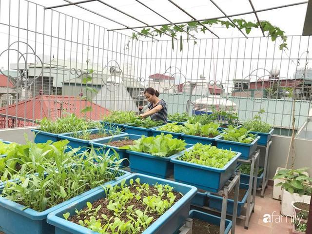 Kinh nghiệm trồng rau quả tốt tươi, bội thu trên sân thượng của mẹ đảm ở Hà Nội - Ảnh 28.