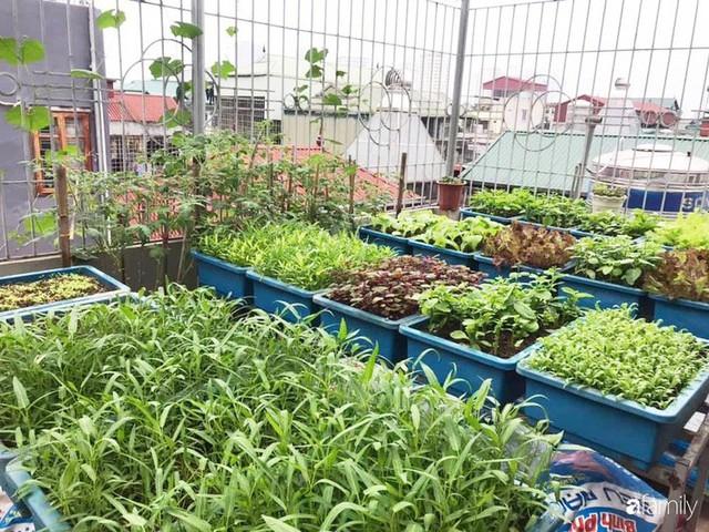 Kinh nghiệm trồng rau quả tốt tươi, bội thu trên sân thượng của mẹ đảm ở Hà Nội - Ảnh 29.