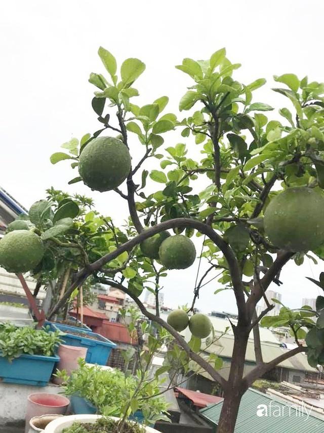 Kinh nghiệm trồng rau quả tốt tươi, bội thu trên sân thượng của mẹ đảm ở Hà Nội - Ảnh 4.