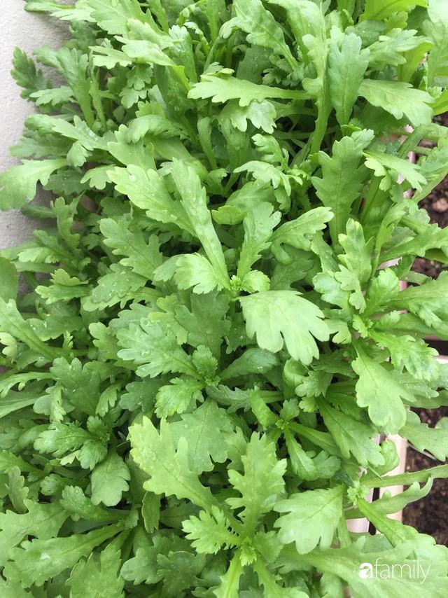 Kinh nghiệm trồng rau quả tốt tươi, bội thu trên sân thượng của mẹ đảm ở Hà Nội - Ảnh 31.