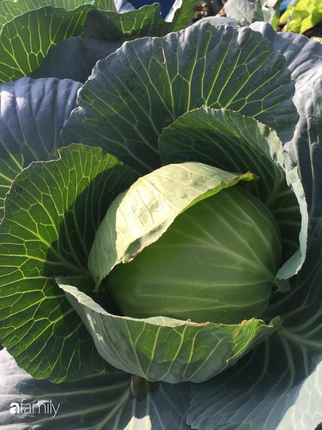 Kinh nghiệm trồng rau quả tốt tươi, bội thu trên sân thượng của mẹ đảm ở Hà Nội - Ảnh 32.