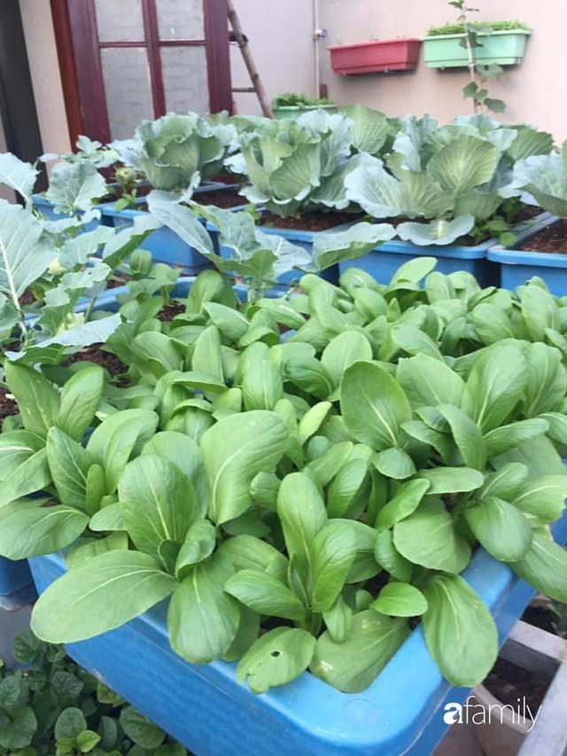 Kinh nghiệm trồng rau quả tốt tươi, bội thu trên sân thượng của mẹ đảm ở Hà Nội - Ảnh 34.