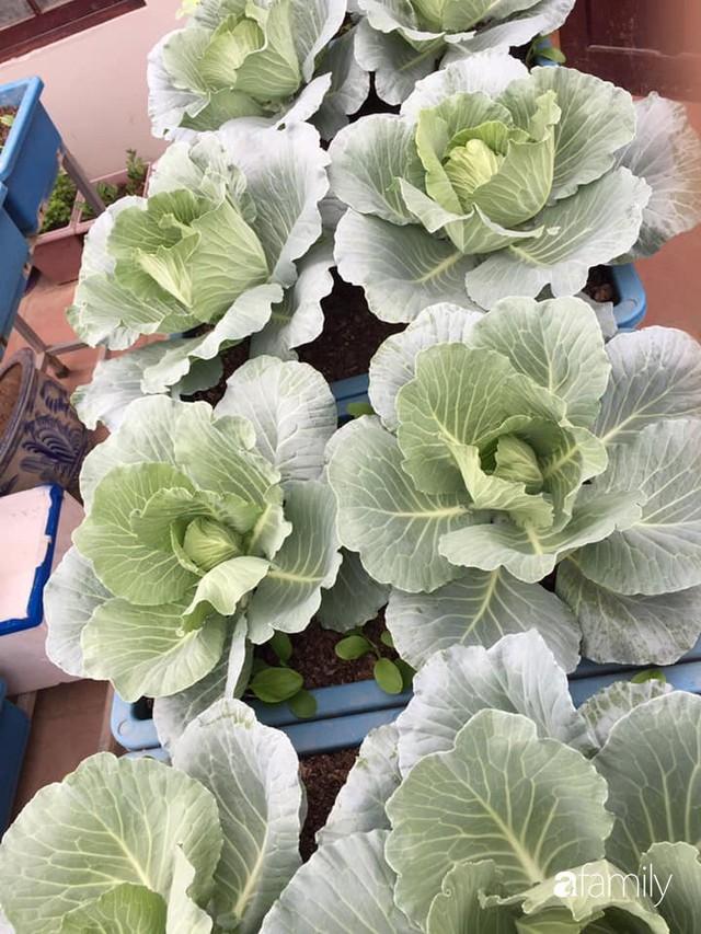 Kinh nghiệm trồng rau quả tốt tươi, bội thu trên sân thượng của mẹ đảm ở Hà Nội - Ảnh 35.