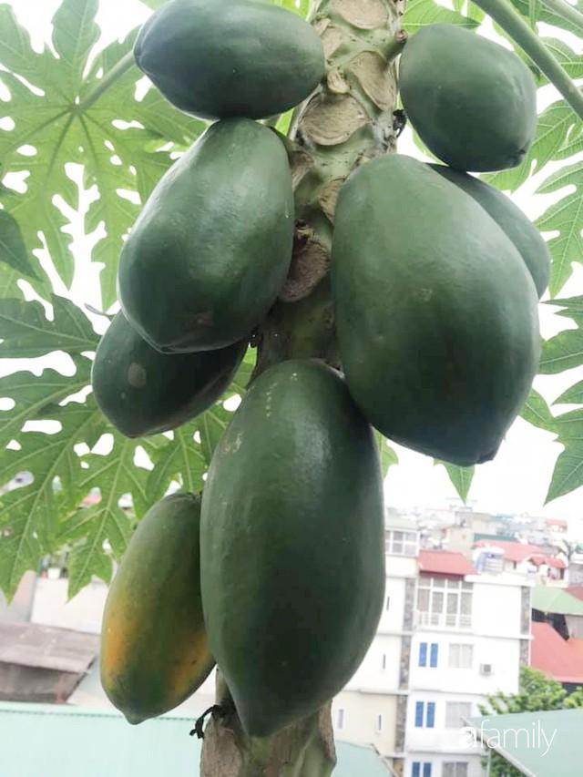Kinh nghiệm trồng rau quả tốt tươi, bội thu trên sân thượng của mẹ đảm ở Hà Nội - Ảnh 37.
