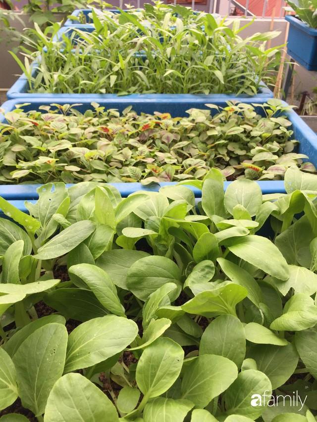 Kinh nghiệm trồng rau quả tốt tươi, bội thu trên sân thượng của mẹ đảm ở Hà Nội - Ảnh 38.