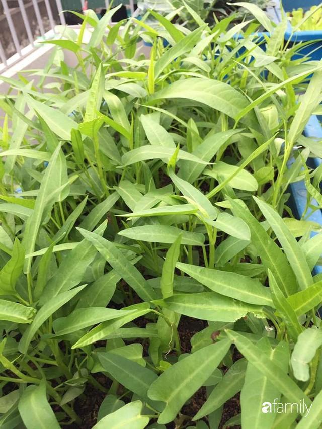 Kinh nghiệm trồng rau quả tốt tươi, bội thu trên sân thượng của mẹ đảm ở Hà Nội - Ảnh 39.
