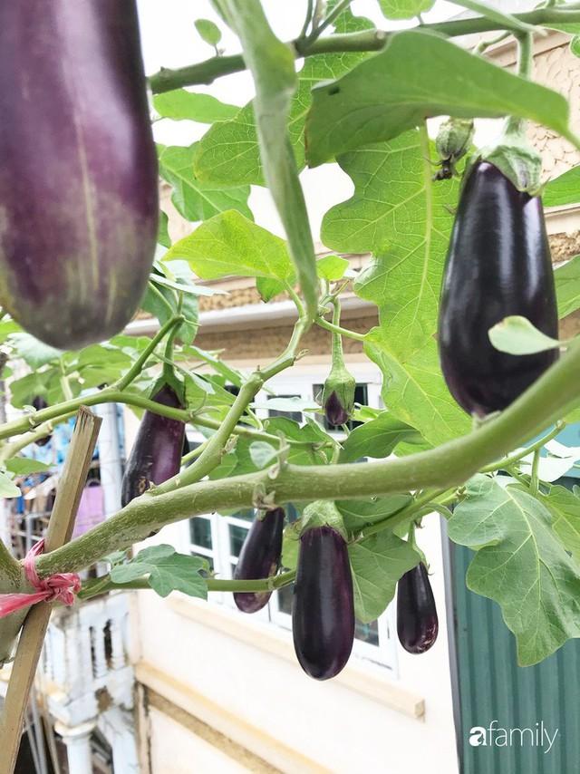 Kinh nghiệm trồng rau quả tốt tươi, bội thu trên sân thượng của mẹ đảm ở Hà Nội - Ảnh 5.