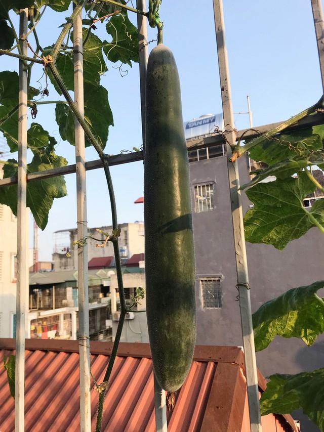 Kinh nghiệm trồng rau quả tốt tươi, bội thu trên sân thượng của mẹ đảm ở Hà Nội - Ảnh 6.